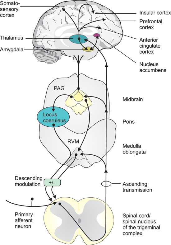 Neurobiology of pain pdf reader